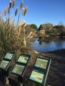 Landscapes for learning