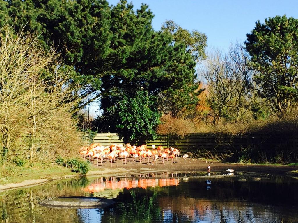 Colourful flamingos
